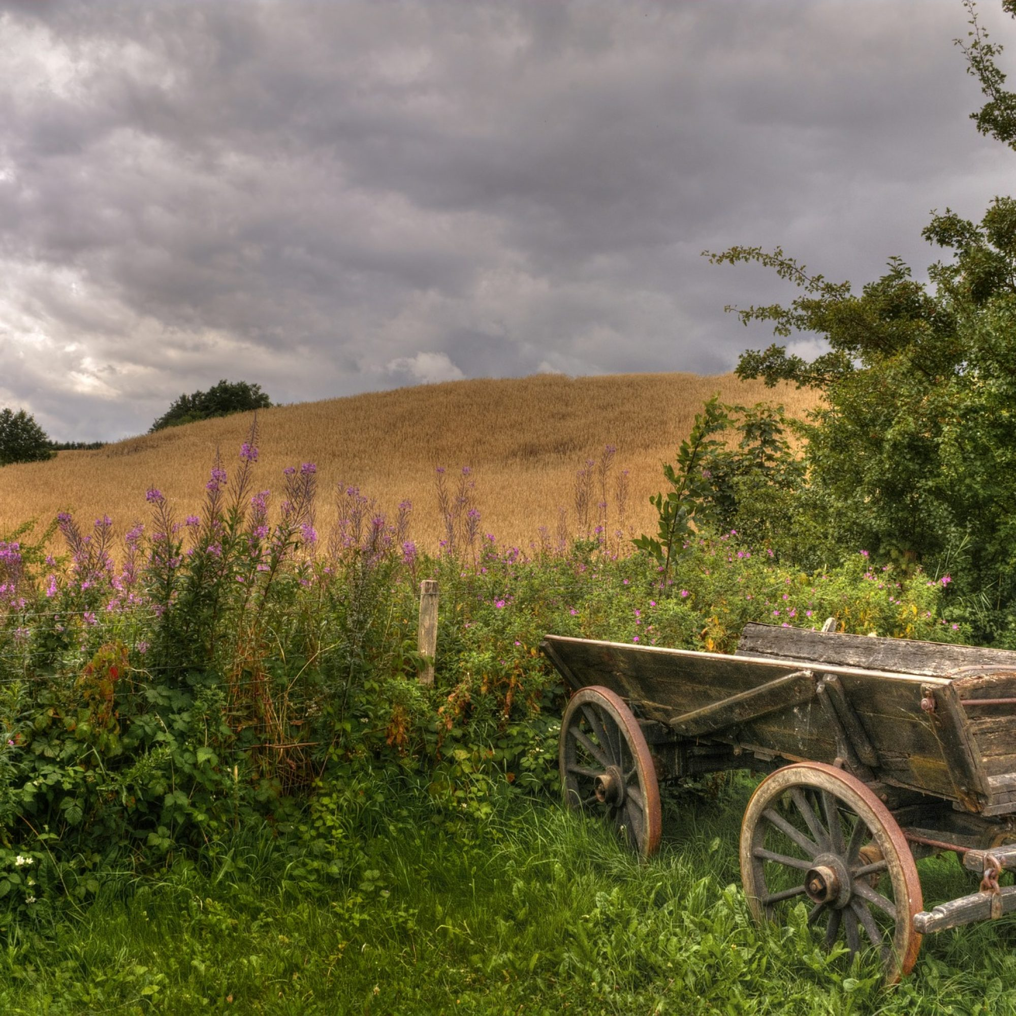 agriculture-3607035_1920